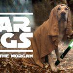 Retrieve of the Jedi - Morgan