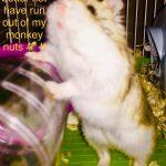 Monkey Nut Monster